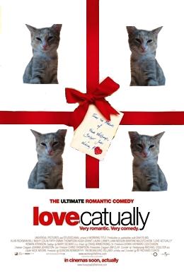 cat-funny-haha